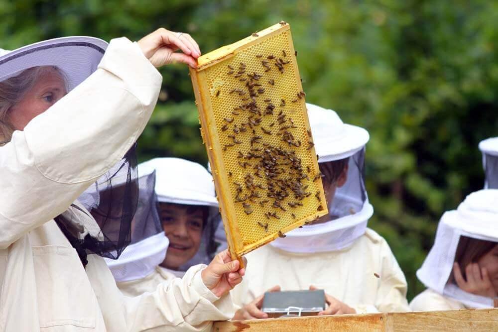 Grüne Waldorfschule mit eigenen Bienen an der Blote Vogel Schule Witten.